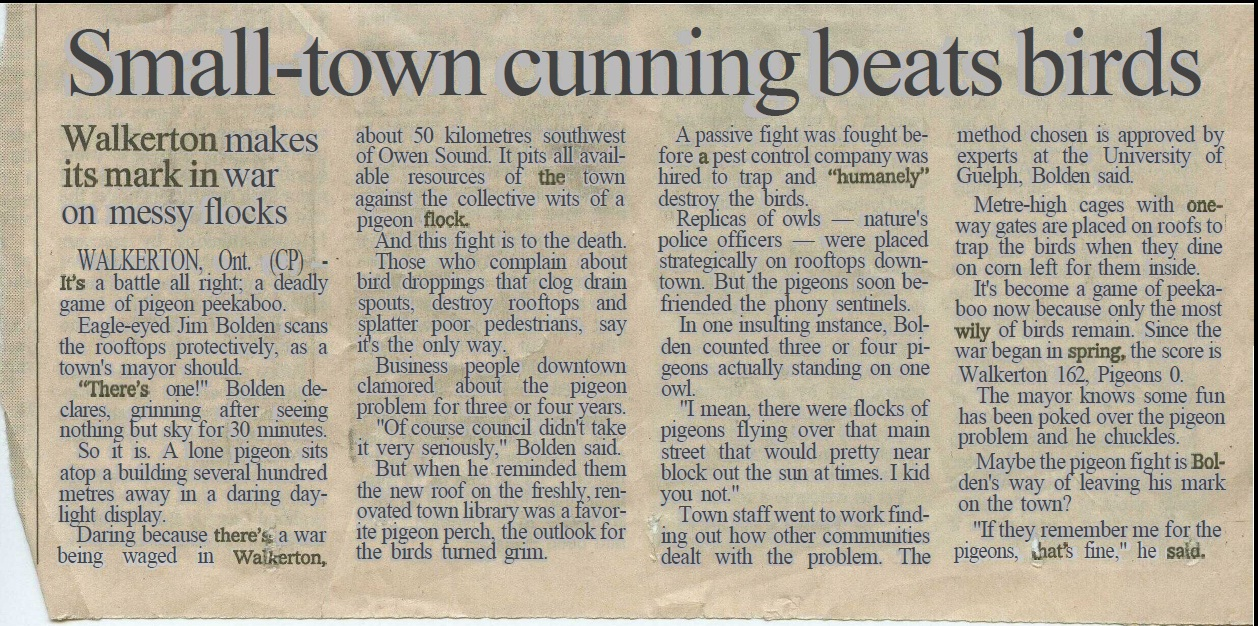 small town cunning beats birds